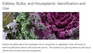 Screen Capture Edibles Home Page