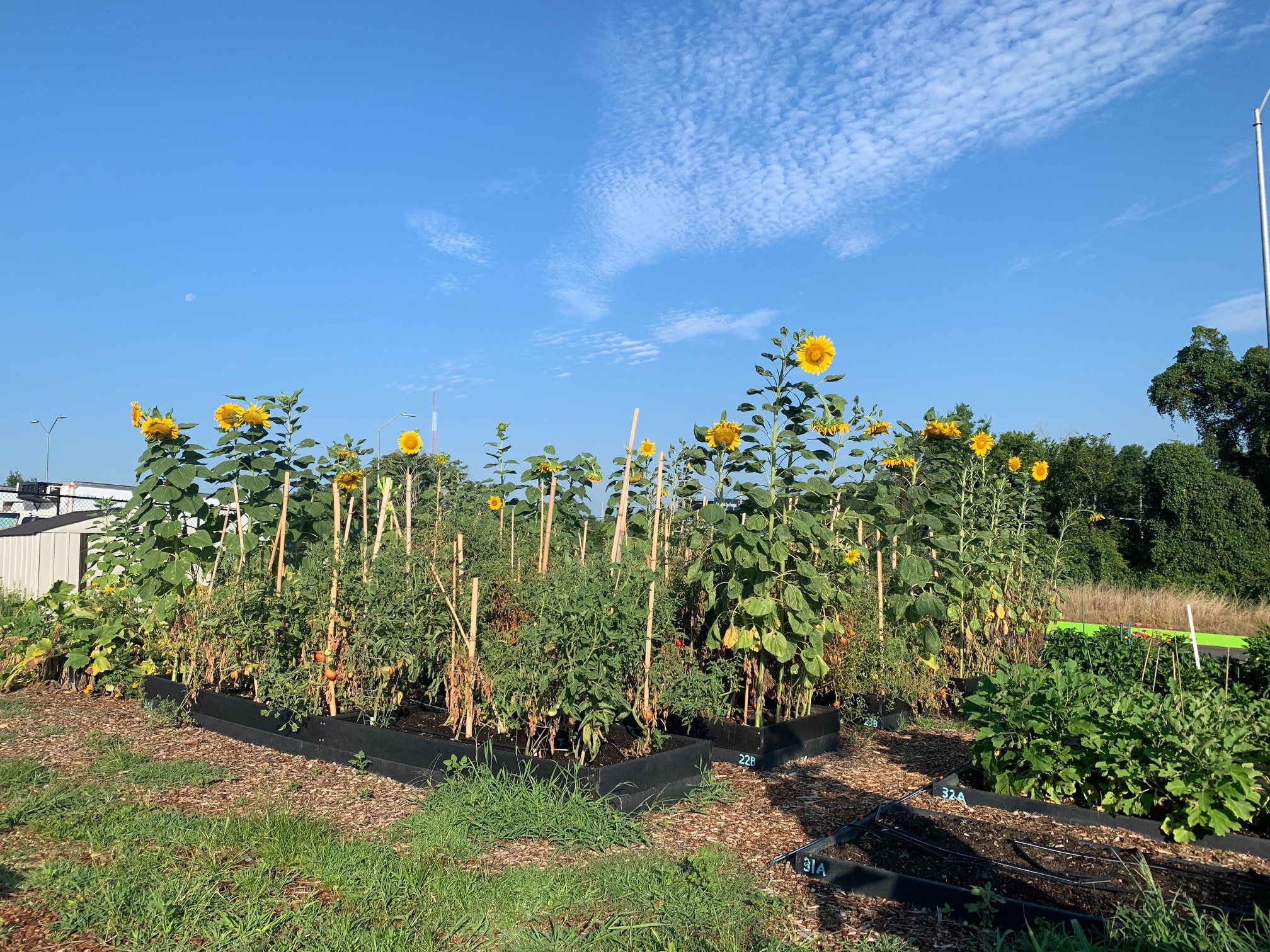 The Food Bank of Central and Eastern NC's demonstration garden